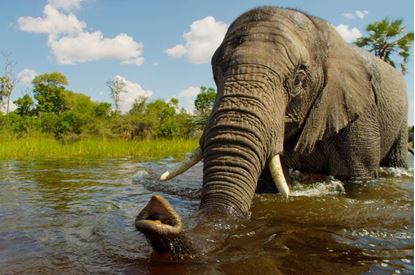 Picture of Wild Africa 3D (IMAX Only)