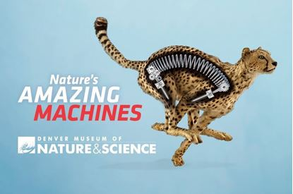 Picture of Nature's Amazing Machines Member Preview Day
