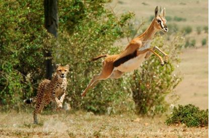 Picture of Incredible Predators