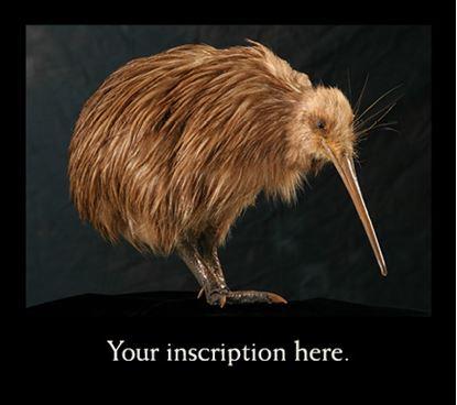 Picture of Kiwi Mount