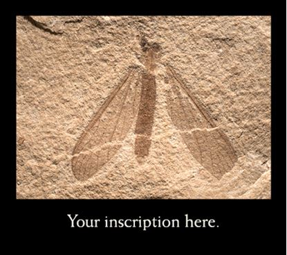 Picture of Fossil Fly