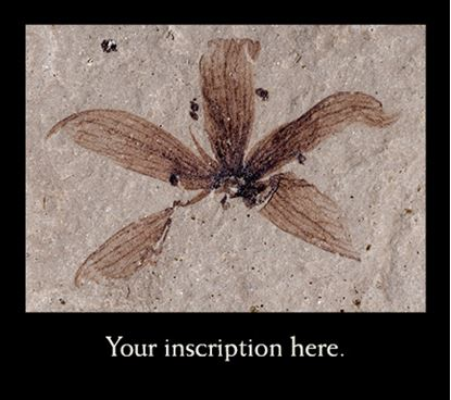 Picture of Fossil Flower