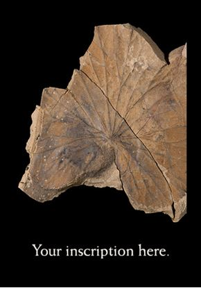 Picture of Fossil Leaf, Castle Rock Road