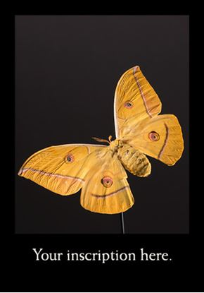 Picture of Silkmoth