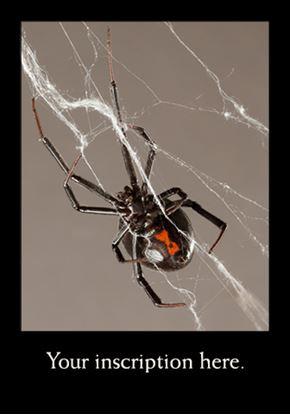Picture of Black Widow Spider