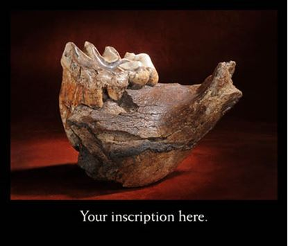 Picture of American Mastodon Mandible