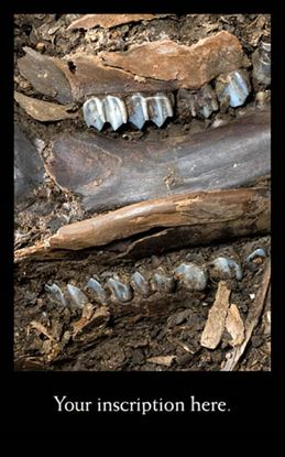 Picture of Ancient Deer Jaw and Teeth