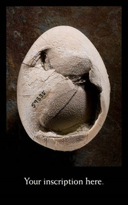 Picture of Fossil Egg