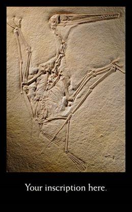 Picture of Pterosaur Skeleton