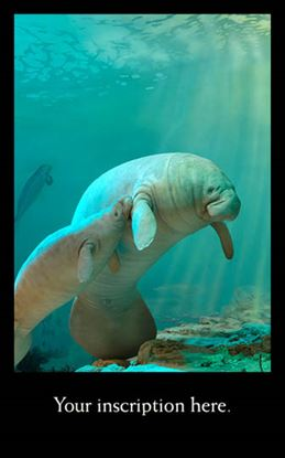Picture of Manatee Diorama