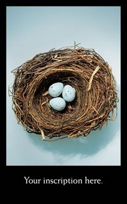 Picture of Nest and Eggs