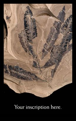 Picture of Fossil Leaf