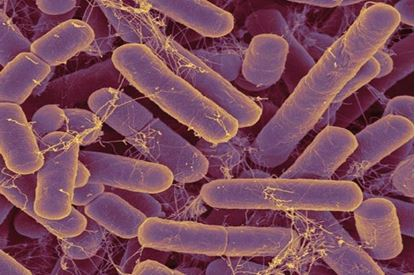 Picture of What's in Your Gut?