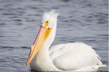 Picture of Bird Walk: Lakes, Reservoirs, and Marshes in Western Weld County