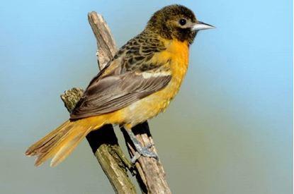 Picture of Bird Walk: Hidden Hotspots of Eastern Colorado