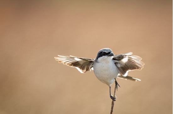 Picture of Bird Walk: Chico Basin Ranch