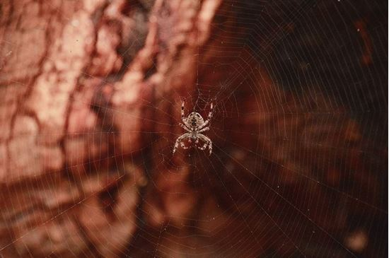 Picture of Spider Biology