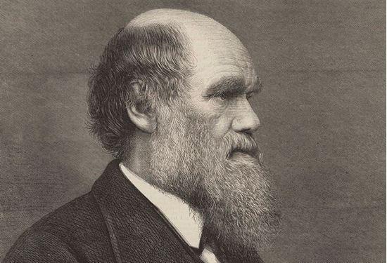 Picture of Meet Charles Darwin 6 p.m.