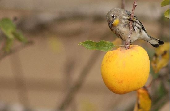 Picture of Bird Walk: Migrant Traps of the Eastern Plains