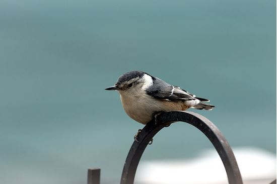 Picture of The Bird Way