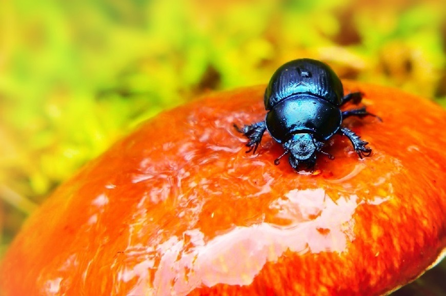 Picture of Beetle Portraits: Form, Texture, and Iridescence